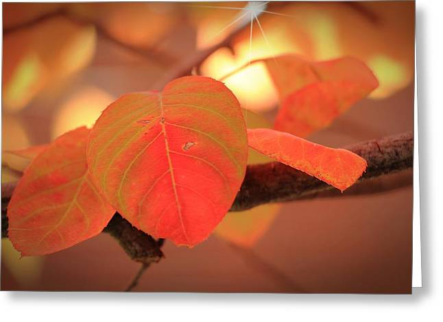 Southern Indiana Autumn Photographs Greeting Cards - Silverberry Leaf Greeting Card by Andrea Kappler