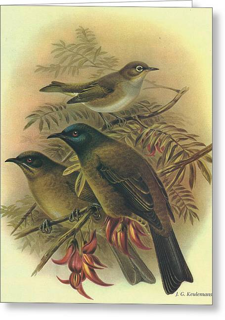 J.g. Greeting Cards - Silvereye and Bellbird Greeting Card by J G Keulemans