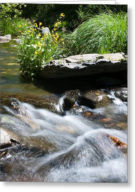 West Fork Greeting Cards - Silvery Waterbreak Greeting Card by Shannon Hastings