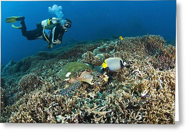 Similan Islands Thailand Scuba Diver Greeting Card by Stuart Westmorland