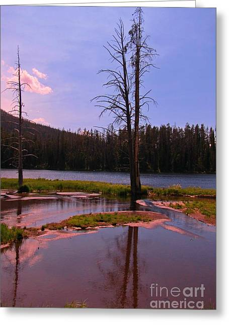 Reflections Of Trees In River Greeting Cards - Simple Beauty of Yellowstone Greeting Card by John Malone