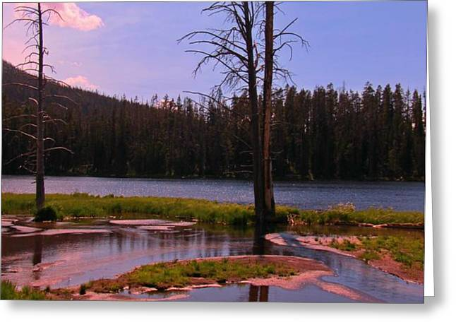 Simple Beauty of Yellowstone Greeting Card by John Malone