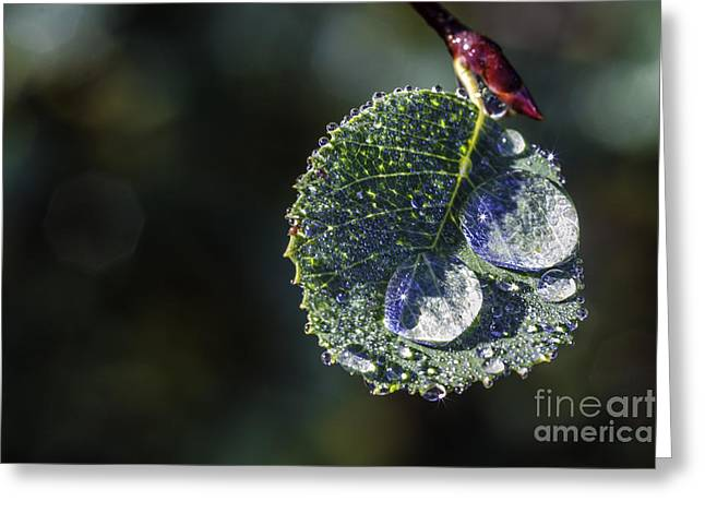 Raindrops On Leaves Greeting Cards - Simple Blessings Greeting Card by Mitch Shindelbower