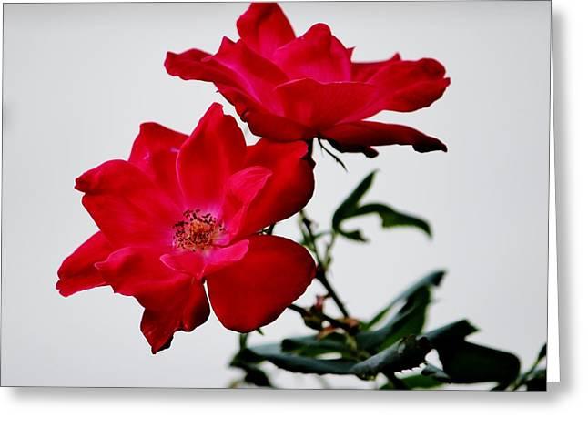 Stamen Digital Greeting Cards - Simple Flowers Greeting Card by Cynthia Guinn