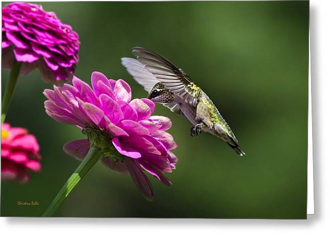 Hovering Greeting Cards - Simple Pleasure Hummingbird Delight Greeting Card by Christina Rollo