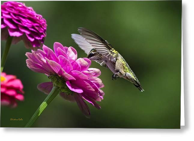 Simple Pleasure Hummingbird Delight Greeting Card by Christina Rollo