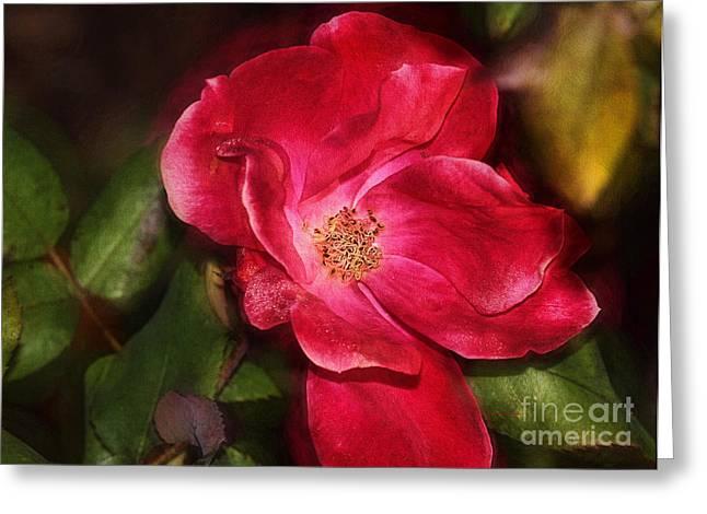 Deborah Greeting Cards - Simple Rose Greeting Card by Deborah Benoit