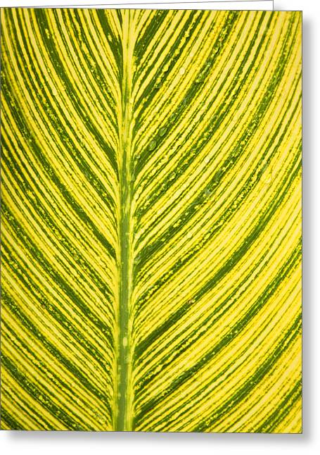 Canna Greeting Cards - Simple Stripes Greeting Card by Marilyn Hunt