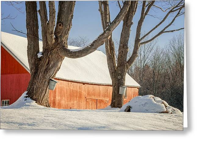 Maple Syrup Greeting Cards - Simple Sugar Greeting Card by Bill  Wakeley