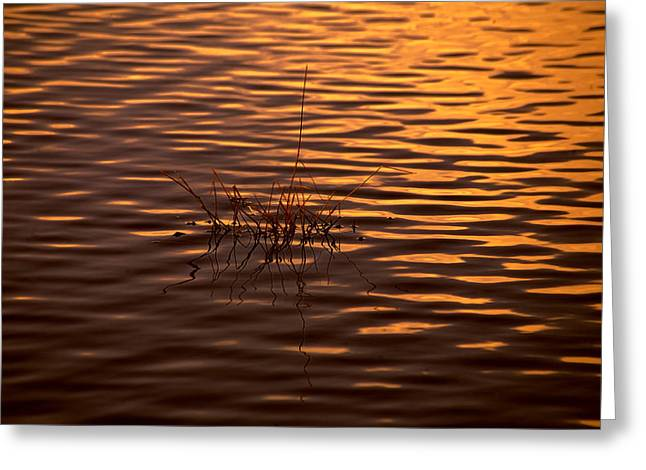 Tangerine Greeting Cards - Simple Sunset Greeting Card by Bonnie Bruno