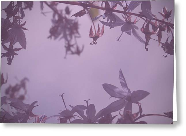Violett Greeting Cards - Simplicity Greeting Card by Nomad Art And  Design