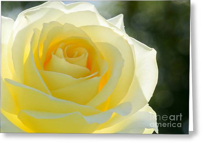 Rosette Greeting Cards - Simplicity Greeting Card by Sabrina L Ryan