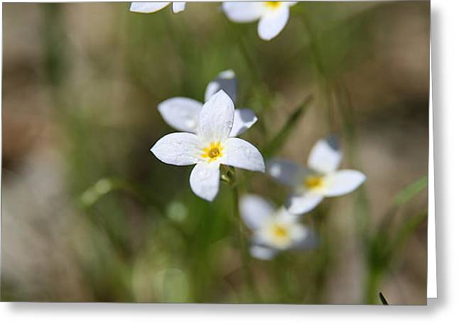 Wildflower Fine Art Greeting Cards - Simplify Greeting Card by Neal  Eslinger