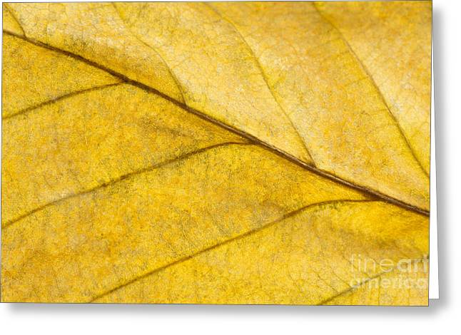 Diagonal Lines Greeting Cards - Simply Beech Greeting Card by Anne Gilbert