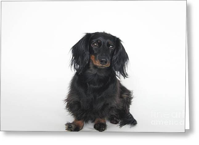 Black And Tan Dachshund Greeting Cards - Simply Dachshund Greeting Card by Rachel Rice