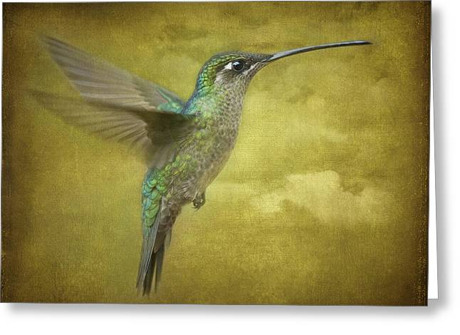 Hovering Greeting Cards - Simply Magnificent.. Greeting Card by Nina Stavlund