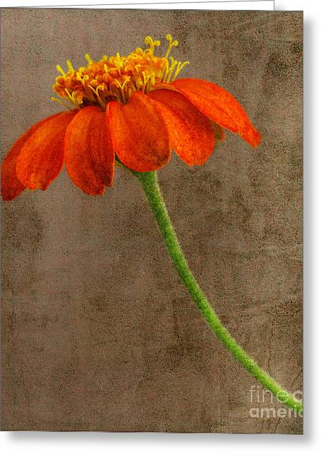 Dave Bosse Greeting Cards - Simply Orange Greeting Card by Dave Bosse