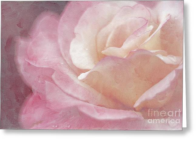 Close Focus Floral Greeting Cards - Simply Rose Greeting Card by Darren Fisher