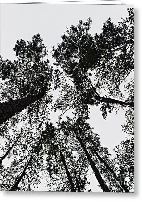Office Space Greeting Cards - Simply Trees Greeting Card by Tom Gari Gallery-Three-Photography