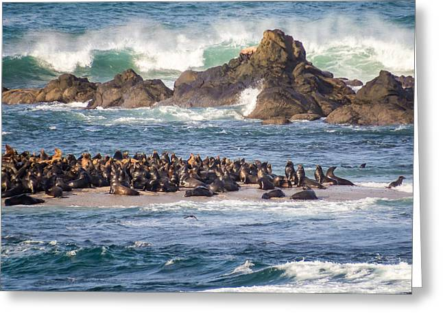 California Sea Lions Greeting Cards - Simpsons Reef Sea Lions Greeting Card by Kristal Talbot