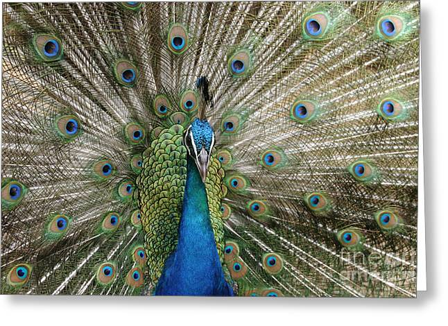 Love The Animal Greeting Cards - Sing to the Sanctified Greeting Card by Sharon Mau