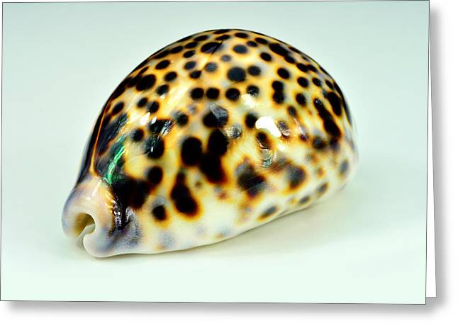 Shell Pattern Mixed Media Greeting Cards - Singel colorfull shell Greeting Card by Toppart Sweden