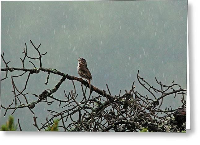 Amimal Greeting Cards - Singing In The Rain Greeting Card by Debbie Oppermann