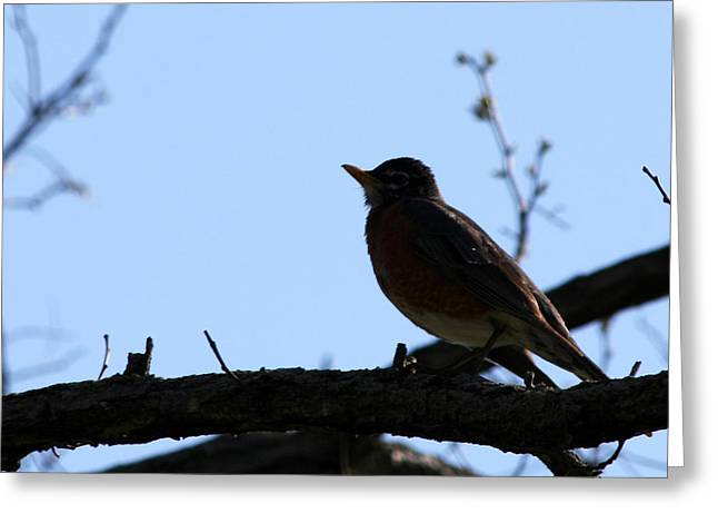 Original Photographs Greeting Cards - Singing is my Nature Greeting Card by Vadim Levin