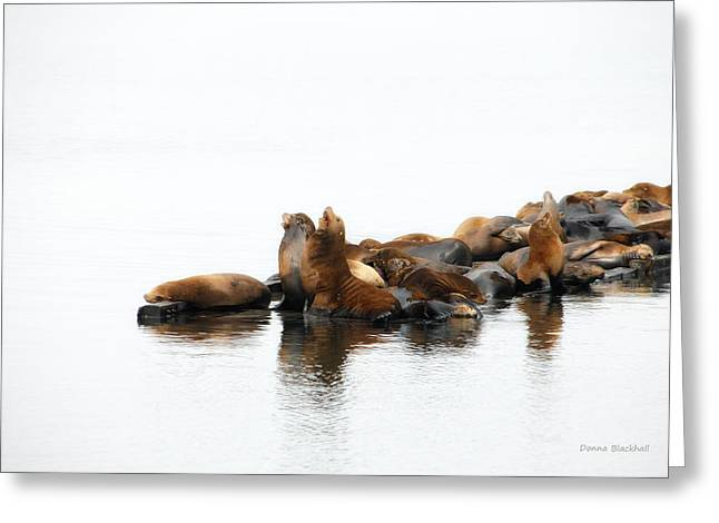 California Sea Lions Greeting Cards - Singing Seals Greeting Card by Donna Blackhall