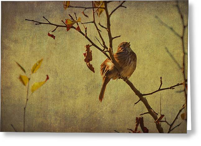Bird On Tree Mixed Media Greeting Cards - Singing Sparrow Greeting Card by Peggy Collins