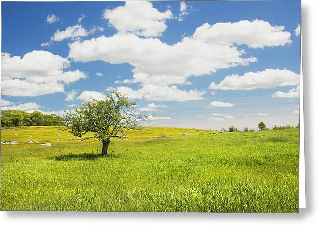 Field. Cloud Greeting Cards - Single Apple Tree In Maine Blueberry Field Greeting Card by Keith Webber Jr