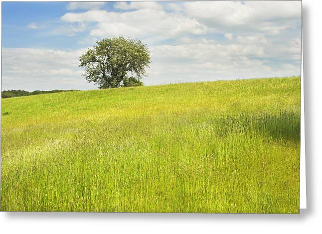 Field. Cloud Greeting Cards - Single Apple Tree In Maine Hay Field Greeting Card by Keith Webber Jr