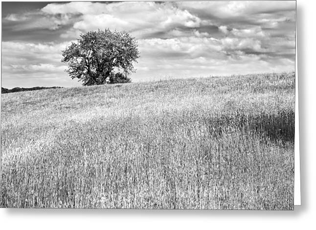 Field. Cloud Digital Art Greeting Cards - Single Apple Tree In Maine Hay Field Photograph Greeting Card by Keith Webber Jr