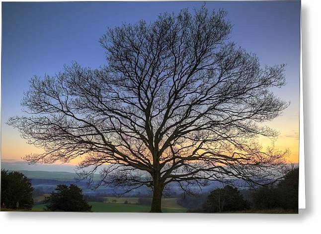 Single Bare Winter Tree Against Vibrant Sunset Greeting Card by Matthew Gibson