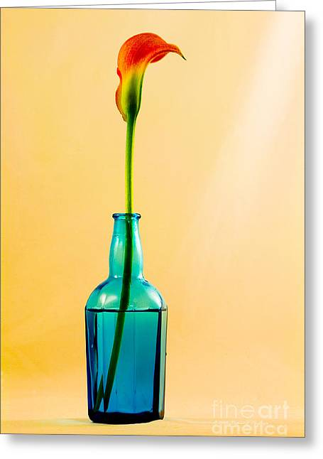 Flower Stems In Bottle Greeting Cards - Single Calla In Blue Bottle Greeting Card by Richard J Thompson