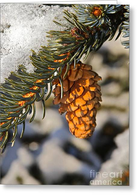 Pine Cones Greeting Cards - Single Cone Greeting Card by Rick  Monyahan
