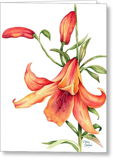 Day Lilly Paintings Greeting Cards - Single Day Lilly Greeting Card by Diana Sanford
