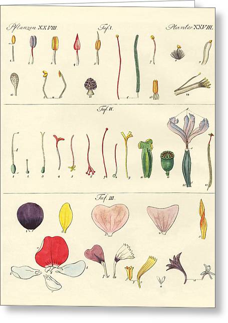 Stigma Drawings Greeting Cards - Single flower parts Greeting Card by Splendid Art Prints