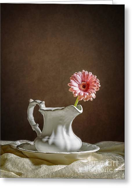 Gerbera Greeting Cards - Single Gerbera Flower Greeting Card by Amanda And Christopher Elwell