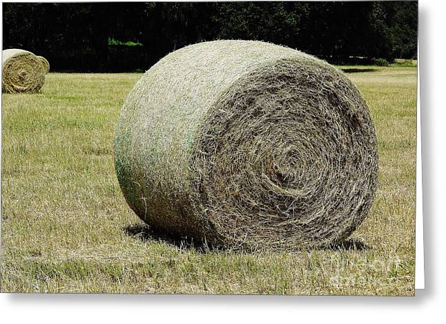 Hay Bales Greeting Cards - Hay In The Field Greeting Card by D Hackett