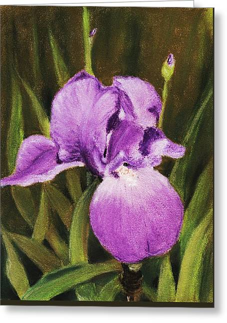 Iris Pastels Greeting Cards - Single Iris Greeting Card by Anastasiya Malakhova