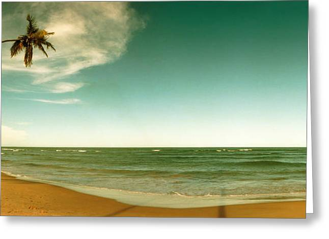 Color Bending Greeting Cards - Single Leaning Palm Tree On The Beach Greeting Card by Panoramic Images