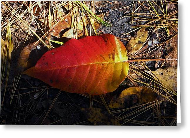 Red Fallen Leave Photographs Greeting Cards - Single Leaf Greeting Card by Michael Saunders