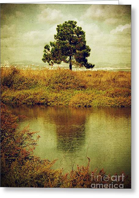 Wetland Greeting Cards - Single pine tree Greeting Card by Carlos Caetano