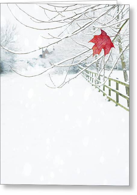 Winter Scene Photographs Greeting Cards - Single Red Leaf Greeting Card by Amanda And Christopher Elwell