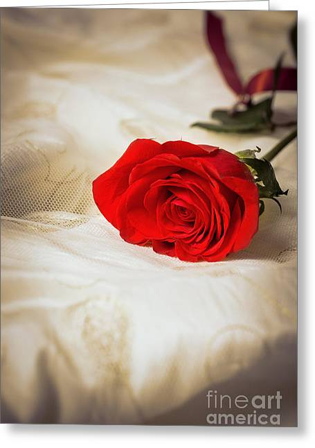 Single Photographs Greeting Cards - Single Red Rose Greeting Card by Amanda And Christopher Elwell