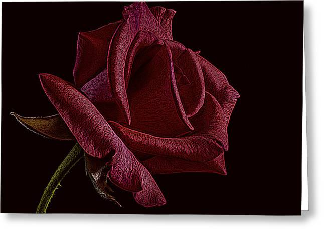Cabin Wall Greeting Cards - Single Red Rose of Love Greeting Card by David Dehner