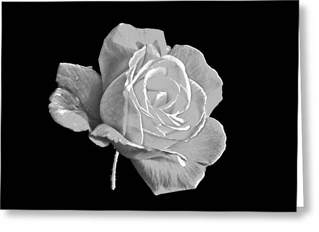 Rose Highlights Greeting Cards - Single Rose Greeting Card by Roger  Booton