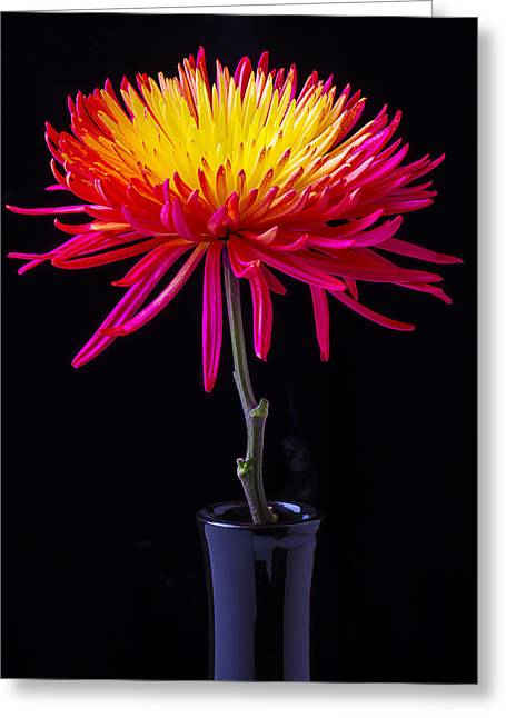 Single Photographs Greeting Cards - Single Spider Mum Greeting Card by Garry Gay