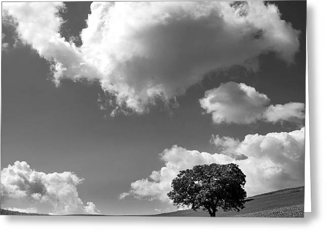 Europe Greeting Cards - Single tree. Auvergne. France Greeting Card by Bernard Jaubert
